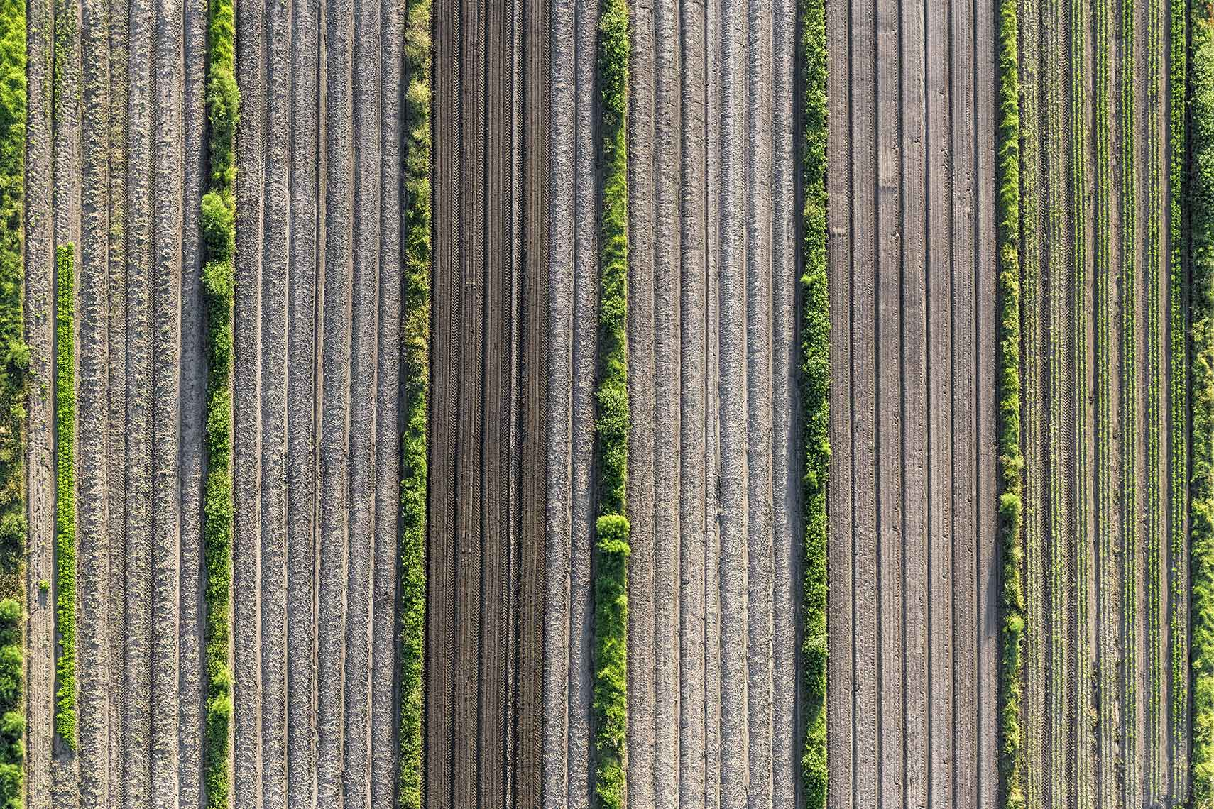Crops Aerial Landscape Hot Air Balloon Melbourne Lines