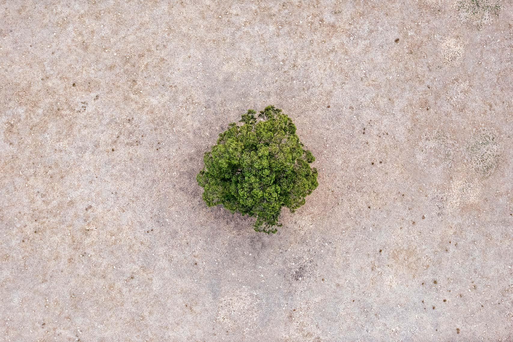Zoe Wetherall / Aerial Landscape / Single Tree