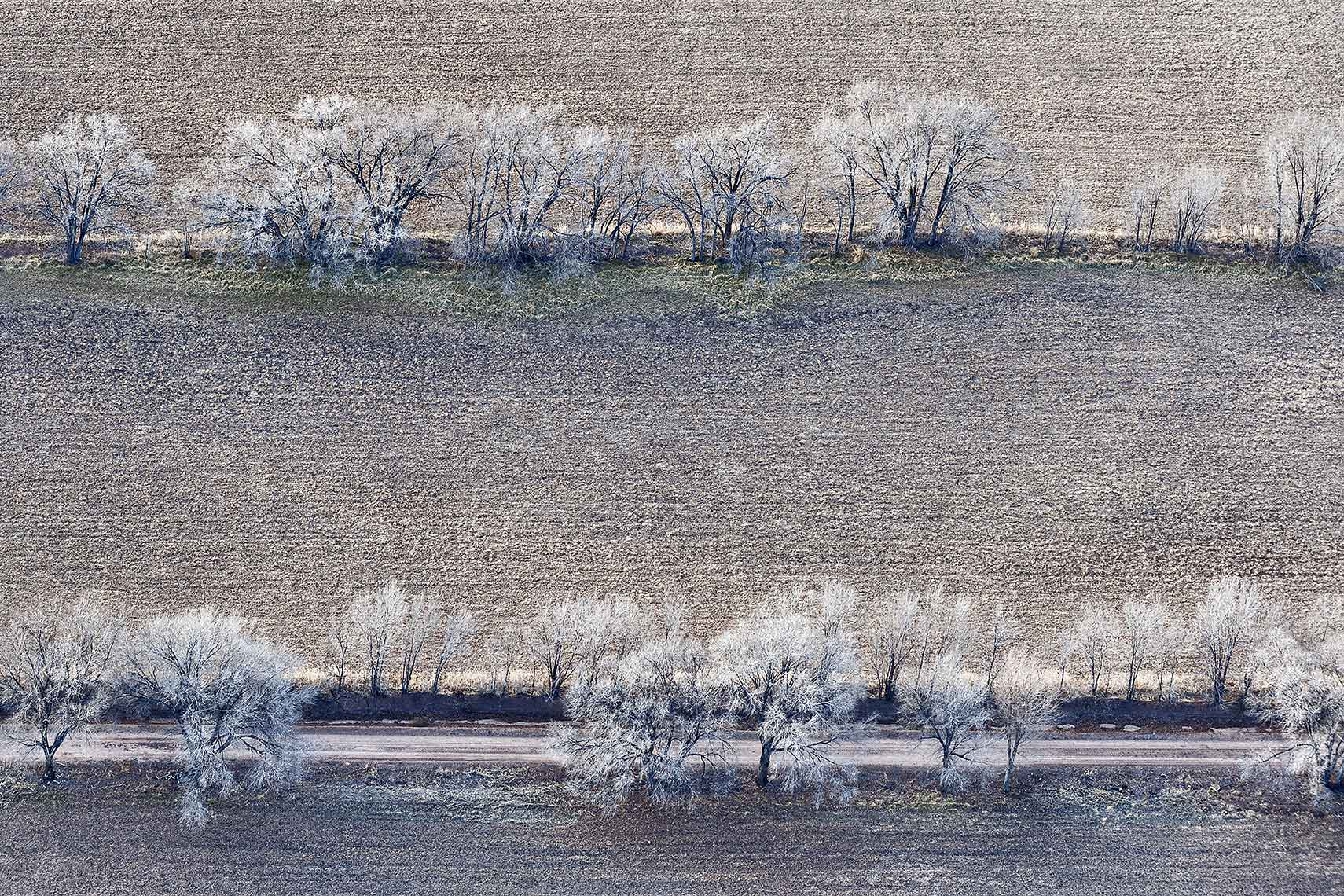 Zoe Wetherall / Aerial Landscape /Line of Trees